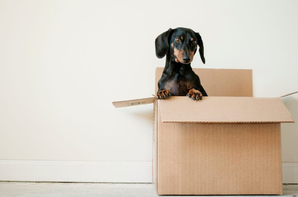dog in boxes for moving